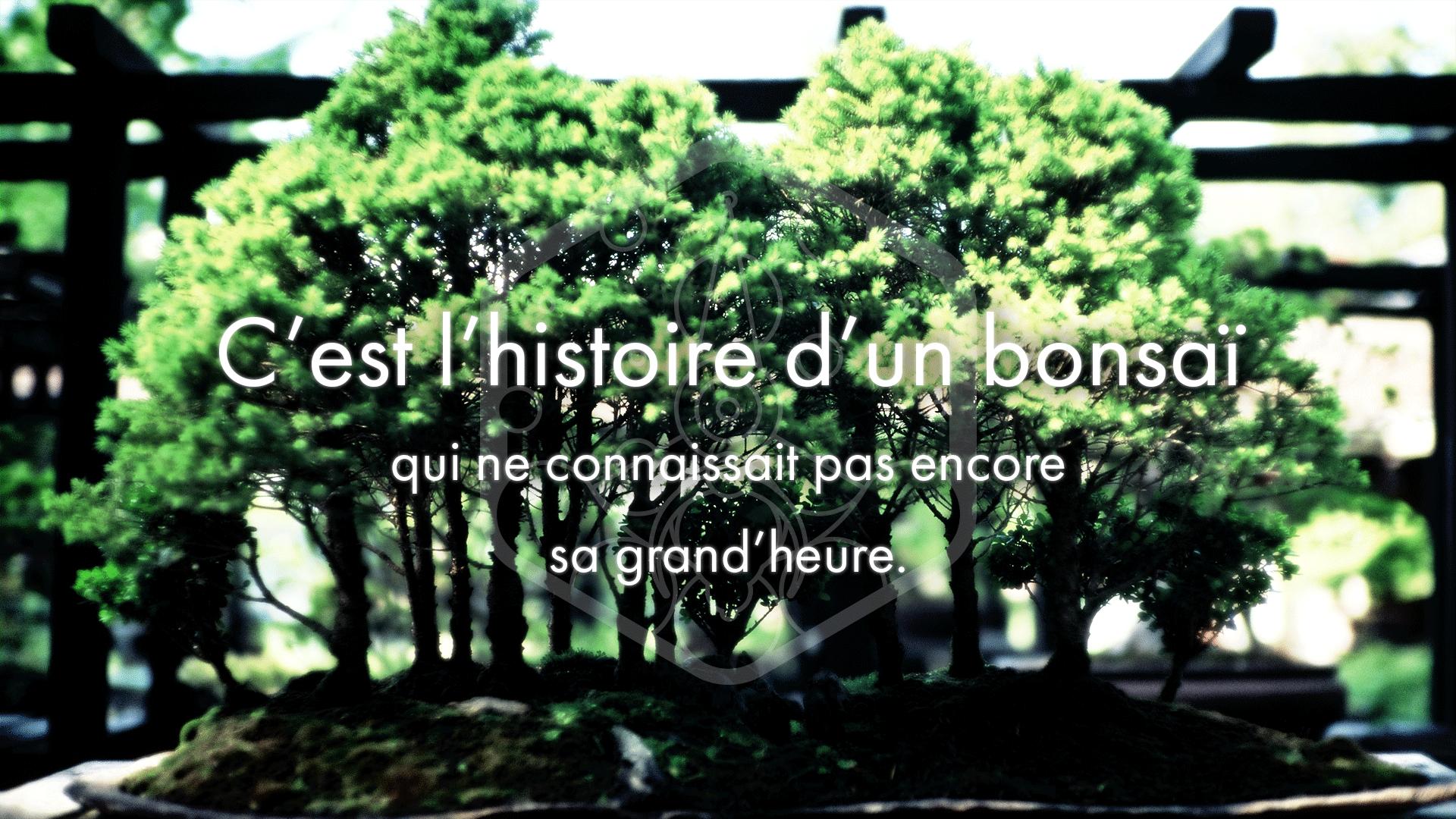 C'est l'histoire d'un bonsaï…